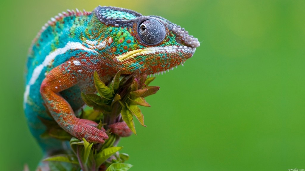 wallpaper-reptiles-animals-alexfas01